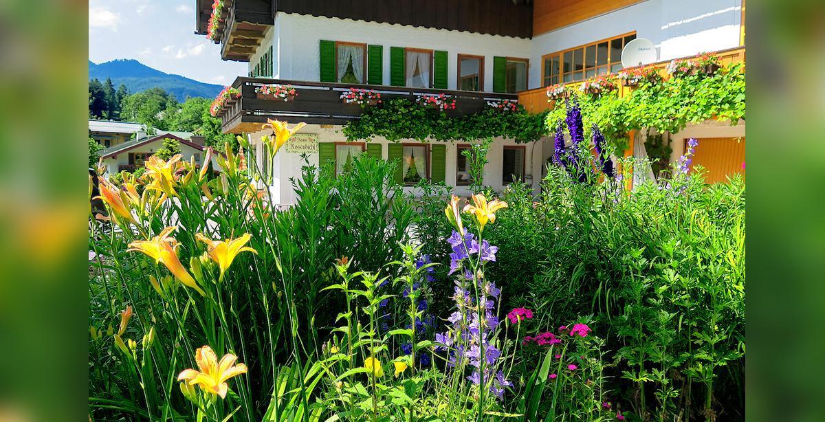 Blumenwiese_Ferienhaus-Rosenbichl.jpg