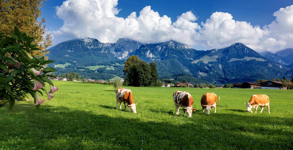 Urlaub_auf_dem_Bauernhof.jpg